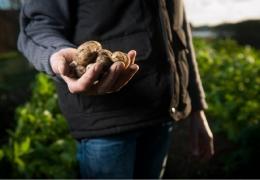 Manitoba to Celebrate Organic Research During National Organic Week