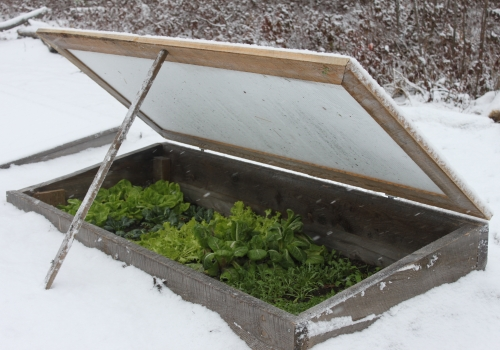 Niki's 10 Best Veggies for Winter Harvesting