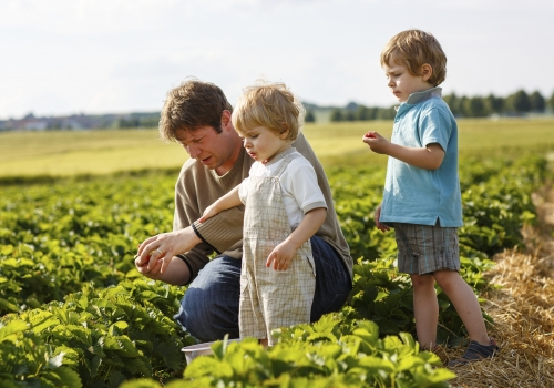 Organic Food For the Family